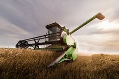 Plockning av vetefältet med sammanslutningen Royaltyfria Foton