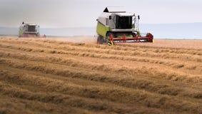 Plockning av vetefältet med sammanslutningen Arkivfoton