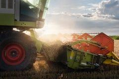 Plockning av vetefältet med sammanslutningen Royaltyfria Bilder