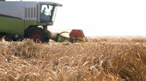 Plockning av vetefältet med sammanslutningen arkivfoto