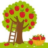 Plockning för Apple träd Arkivbild