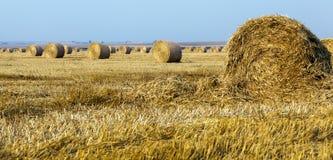 Plockning för kornskörd Royaltyfri Fotografi