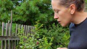 plockning Plockning för den unga kvinnan och äter körsbärsröda bär arkivfilmer