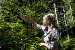 Plockningblåbär för tonårs- flicka i skogen Royaltyfria Foton