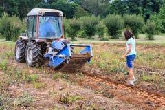 Plockningpotatisar på lantgård i Virginia Arkivfoto