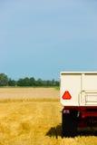 Plockningvete under slutet av sommaren arkivfoton