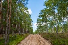 Ploegen-op landweg in bos die als noodsituatieroute dienen voor de gezagsdiensten in het geval van brand polen europa royalty-vrije stock afbeeldingen