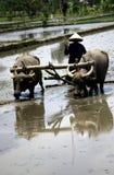 Ploegende gebieden Stock Foto