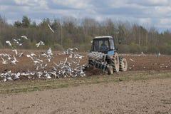 Ploga för traktor Arkivbilder