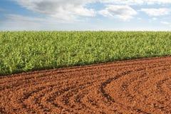 plogad potatis för kantjustering fält fotografering för bildbyråer