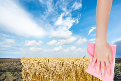 Plogat fält för hand borttagnings vid den rosa torkduken royaltyfria foton