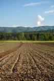Plogat fält med berget Papuk i bakgrunden, Kroatien Fotografering för Bildbyråer