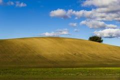 Plogat fält på en klar kulle med trädet Arkivbild