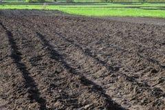 Plogat, planterat och hilling ror svart-jord jord Arkivfoton