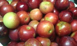 Plombs rouges frais Photographie stock libre de droits