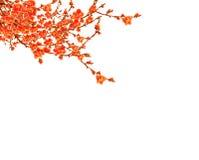 plommon för patt för bakgrundsblomningblomma Royaltyfri Fotografi