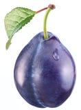 Plommon med en leaf Fotografering för Bildbyråer