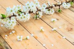 Plommonblomning med vita blommor på wood bakgrund Royaltyfri Fotografi
