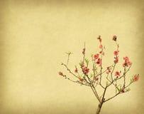Plommonblomning på gammal antikvitetpappersbakgrund royaltyfria bilder