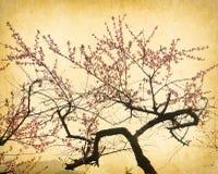 Plommonblomning på gammalt antikt tappningpapper Arkivfoto