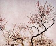 Plommonblomning på gammalt antikt tappningpapper Royaltyfri Foto
