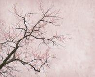 Plommonblomning på gammalt antikt tappningpapper Fotografering för Bildbyråer