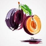 Plommonfrukter Arkivfoto