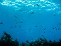 Plongée à l'air Photo libre de droits