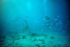 Plongée à l'air dans Aruba Photos libres de droits