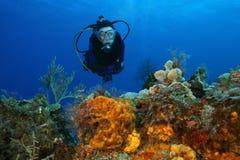 Plongée à l'air de femme au-dessus d'un récif coralien Photo stock