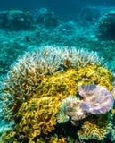 Plongée à l'air de la Grande barrière de corail Images libres de droits