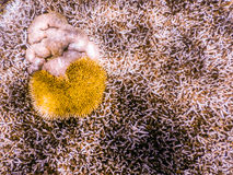 Plongée à l'air de la Grande barrière de corail Photos libres de droits