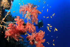 Plongée à l'air en Mer Rouge Image stock