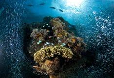 Plongée à l'air, récif coralien, poisson, espèce marine Photo libre de droits