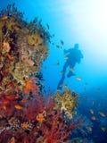 Plongée dans un récif coralien Photographie stock