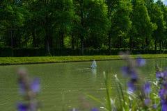 Plongée de cygne dans l'eau photographie stock libre de droits