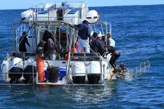 Plongée de requin image stock