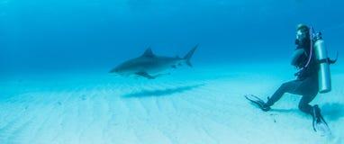 Plongée de requin Images libres de droits