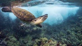 Plongée de tortue sous la vague Image libre de droits