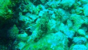 Plongée en Croatie Photo stock