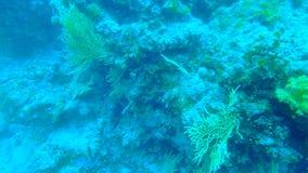 Plongée en Croatie Images stock