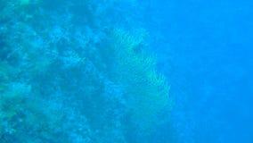 Plongée en Croatie Image stock