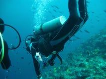 Plongée en mer images libres de droits
