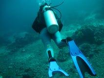 Plongée en mer images stock