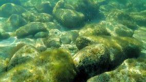 Plongée le long d'un récif d'un monde sous-marin tout en passant des poissons clips vidéos