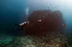 Plongée Maldives Images stock