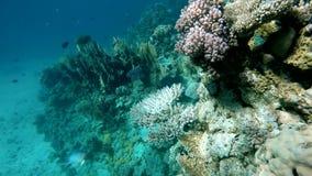 Plongée sur un récif tropical Mer tropicale chaude banque de vidéos