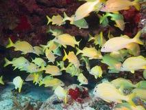 Plongée à l'air sur les récifs coraliens au Mexique Photo libre de droits