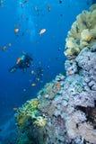Plongeur à côté d'un récif coralien tropical Images libres de droits