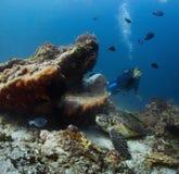 plongeur Images libres de droits